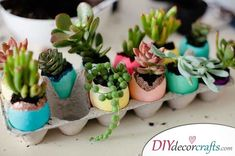 Succulents in Easter Eggs - Easter Crafts for Adults