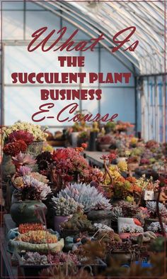 What is the Succulent Plant Business E-Course?  What do I get?  Succulents | Gardening