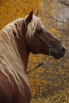 """ Misha - Russian Heavy Draft Found on equestrian. Most Beautiful Animals, Beautiful Horses, Beautiful Creatures, Trees Beautiful, Hello Beautiful, Zebras, Animals And Pets, Cute Animals, All About Horses"