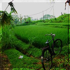 Beautuful rice feilds in Ubud, Bali Dutch East Indies, Bali Travel, Ubud, Pretty Pictures, Southeast Asia, Amazing Places, Places To See, Philippines, The Good Place
