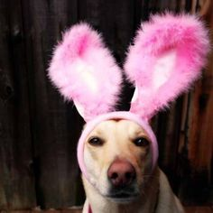 I am so ready for Easter
