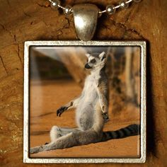 Love this Lemur Loving Yoga