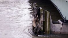 Zouave statue watches the River Seine rising in Paris (Pic: Wikimedia Commons/Poulpy)