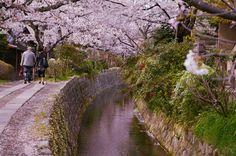 2014/4/7 哲学の道