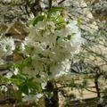 Kiskertünk védelme gyógynövényekkel - Kapanyél Plants, Blog, Blogging, Plant, Planets