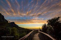 Cette passerelle surélevée permet de marcher le long de la cime des arbres dans la ville du Cap   Buzzly