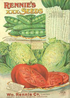 1916 Rennie's seed annual : [catalogue