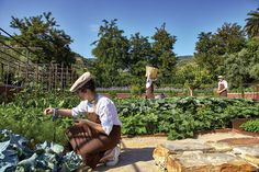 We always have fun. Organic garden at Six Senses Douro Valley, Portugal http://www.sixsenses.com/resorts/douro-valley/sustainability