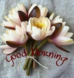 Morning Greetings Quotes, Good Morning Messages, Good Morning Good Night, Good Morning Wishes, Good Morning Inspirational Quotes, Good Morning Quotes, Good Night Photo Images, Good Morning Images Flowers, Evening Greetings