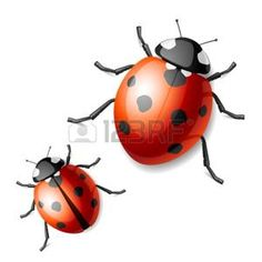 Illustration about Detailed vector illustration of a ladybird. Illustration of cartoon, illustration, detail - 12514606 Baby Ladybug, Ladybug Art, Ladybird Images, Ladybird Ladybird, Bugs And Insects, Free Vector Art, Graphic Design Art, Clip Art, Illustration
