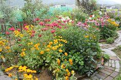 7月の草花ガーデン