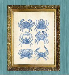 Crab Art Print Blue Crab Art 8 x 10 by HamiltonHousePrints2, $10.00