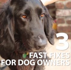 Make life easier for you and your fur-baby >> https://www.facebook.com/HGTV/videos/10153827666474213/