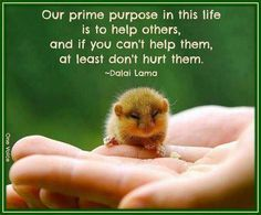 """Our prime purpose in this life is to help others, and if you can't help them, at least don't hurt them."" -- Dalai Lama ALWAYS BE KIND! Great Quotes, Quotes To Live By, Me Quotes, Inspirational Quotes, Qoutes, Motivational Pics, Simply Quotes, Wisdom Quotes, The Words"