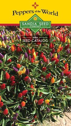Garden Catalogs, Seed Catalogs, Backyard Vegetable Gardens, Outdoor Gardens, Purple Pepper, Growing Peppers, Garden Stand, Fruit Seeds, Pepper Seeds