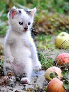 Autumn is just around the corner and little kitty is already out picking apples!