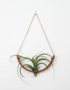 terra cotta air plant cradle