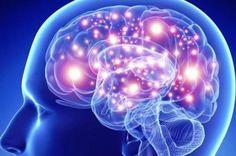 #Descubren 180 regiones en el cerebro - Segundo Enfoque: Segundo Enfoque Descubren 180 regiones en el cerebro Segundo Enfoque Estados…