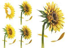 Watercolor Print, Watercolor Flowers, Watercolour Tutorials, Flower Art, Illustration, Nature, Plants, Painting, Design