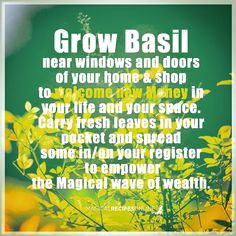 Green Magic, Herbal Magic, Basil, Thoughts, Life, Instagram, Witchcraft, Witches, Abundance