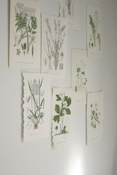 botanical prints in green