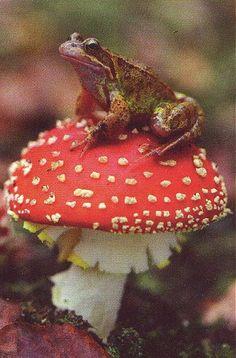 frog on toadstool