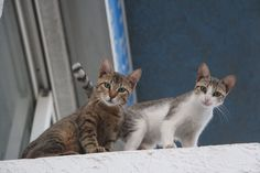 Cats on the island of Kos in Greece. Cats are quite common all over the island but mostly around the tavernas and the resorts. Us Map, Kos, Resorts, Greece, Island, Animals, Instagram, Greece Country, Animales