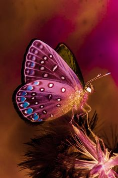 Butterfly Plants, Butterfly Wings, Butterfly Quotes, Butterfly Wallpaper, Betta Fish, Beautiful Butterflies, Amazing Nature, Photos, Pictures