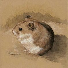 hamster drawing - Google Search