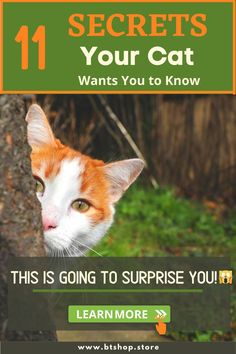 Your cat keeps all kinds of secrets. Do you want to know how he really feels about you petting him? #catsecrets #cute #funfacts Fun Facts About Cats, Cat Facts, Cat Grooming, Want You, Is 11, The Secret, Feels, Creatures, Cute
