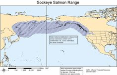 Is Fukushima Radiation Contaminating Tuna, Salmon and Herring On the West Coast of North America? Salmon