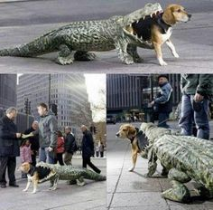 Dog costume...how funny!!!