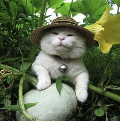 The gardener with a green paw! - your daily dose of funny cats - cute kittens - pet memes - pets in clothes - kitty breeds - sweet animal pictures - perfect photos for cat moms Cute Little Animals, Cute Funny Animals, Funny Cats, Cat Aesthetic, Cute Creatures, Beautiful Creatures, Pretty Cats, Cool Cats, Fur Babies