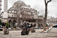 moschea mosque Turhan Hatice cats gatti mici istanbul instanbul turchia canon 5d 35mm f/1.4 1.4