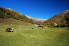 Die letzten Tage auf der Alm #Kasern #Ahrntal http://www.freizeit-suedtirol.com/herbst-in-suedtirol-wandern-tauferer-ahrntal/