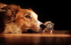 Best of friends..
