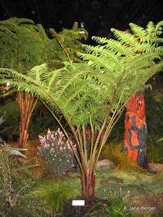 7 Best Yellow Flowering Australian Native Trees Bushes