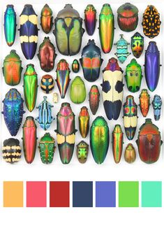 beetles - so many colour combos, as well as different finishes - matte, irridescent, coppery.......