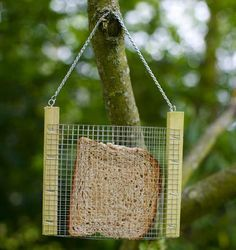 DIY toast bird feeder.