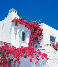 bouganvillea is the typical coastal mediterranean plant - gorg colors on the white houses