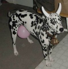 14 Adorable Dogs In Halloween Costumes [PICTURES]