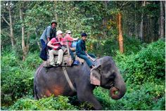 Elephant Safari in #ChitwanNationalPark an article by Vineeta Yadav 'Acceptance by the mighty animal to take you on his personal tracks in a forest of dense and tall grasses.' Giving away the additives that would make you wishful for an Elephant Safari in Barahi, Chitwan! Read the complete article here: http://goo.gl/0JcBHO