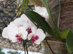 A beleza as vezes me deixa sem palavras. ✨✨✨✨ #orquideas #flores🌸 #flores #flowerslovers #flower #naturalbeauty #naturezadivina #naturezaespetacular #ecology #ecologic #ecologia #blznatural #sutentabilidadeambiental #sustainability #sustentabilidadedavida #sustentabilidade Natural Beauty from BEAUT.E