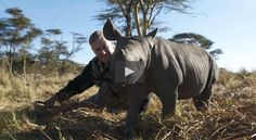 "The Rhino Who Joined the Family: This video demonstrates that a rhino can form long lasting emotional attachments to humans, and vice versa.  ""Rescued from the flooding of the Zambezi River, Rupert, an orphaned black rhinoceros, was raised by wildlife vet Dr. John Condy, capturing the hearts of the vet's four children before his release into the wild."" #friends #rhino #emotions"