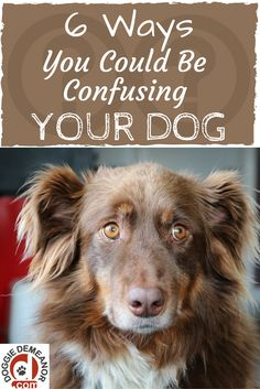 Is your dog sometimes inconsistent when it comes to listening to you? You may be confusing him!