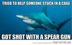 Is tough being a shark…