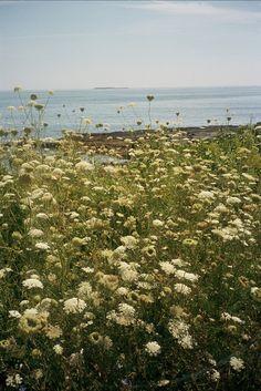 """Maine Summer Randoms"" from B.Ferry"