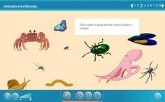 ANIMALES INVERTEBRADOS: Internet en el Aula ~ Juegos gratis y Software Educativo Teaching Tools, Bugs, Internet, Poster, Animals, Educational Software, Silk, Animaux, Animais
