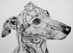 Greyhound by ~InjectVibrancy on deviantART