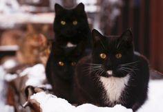 Gatos se reúnem perto de aquecedor em Moscou, na Rússia, em foto de 9 de janeiro (Foto: Reuters/Maxim Shemetov)Os gatos levam a fama de serem antissociais, ao menos quando comparados aos cachorros. …